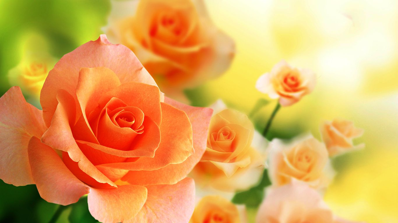 Orange Roses 29730 30449 Hd Wallpapers For The Love Of Music